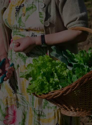 roots-food-cta